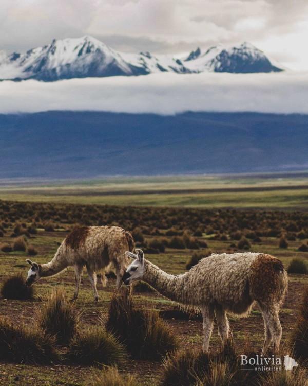 Bolivian Express We Need Nature More Than Nature Needs Us